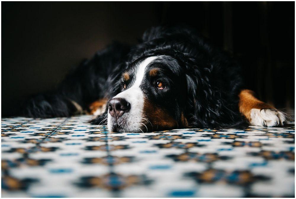 ongeposeerde authentieke familiefotografie fotograaf gezin met hond