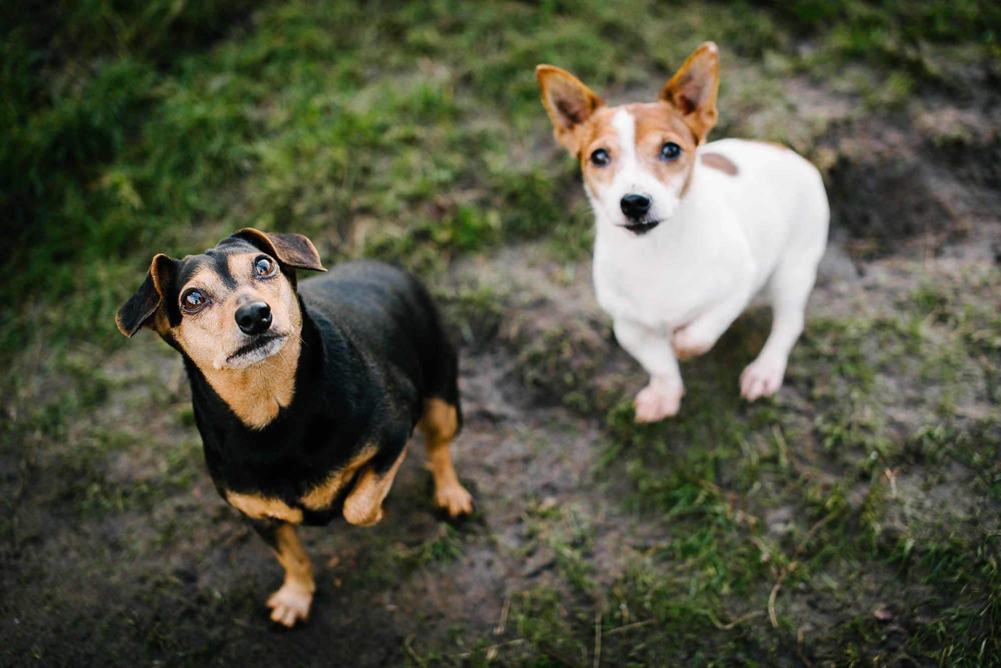 fotoshoot met honden vught